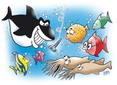 squalo-contact